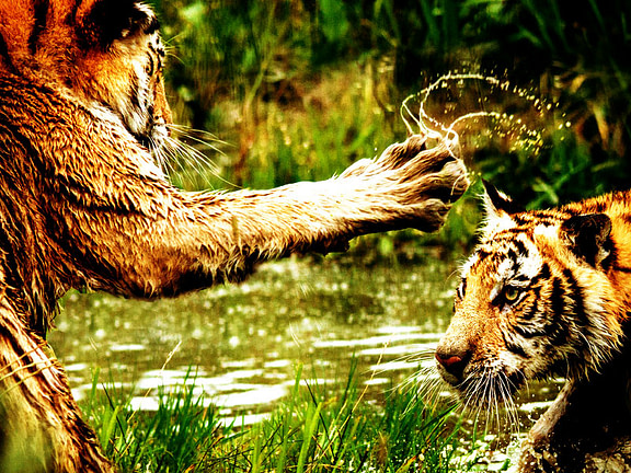 Dancing with Hand Tricks: Failing the Tiger Claw